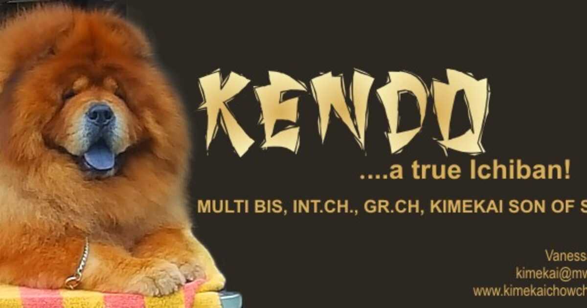 Kendo Chow Chows Of Consistant Excellence